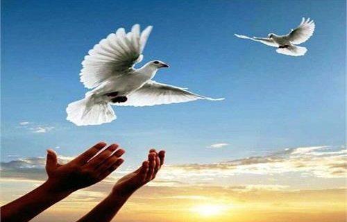 آزادی ۲۱۱ زندانی غیرعمد یزدی در ۶ ماهه امسال