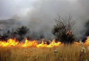 بخشی از جنگلهای خاتم یزد آتش گرفت