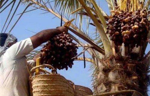 مردم نیکوکار استان یزد ۱۹ میلیارد تومان زکات دادند