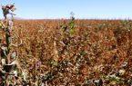 سیلی سرمای پاییزی به کنجدکاران خاتمی